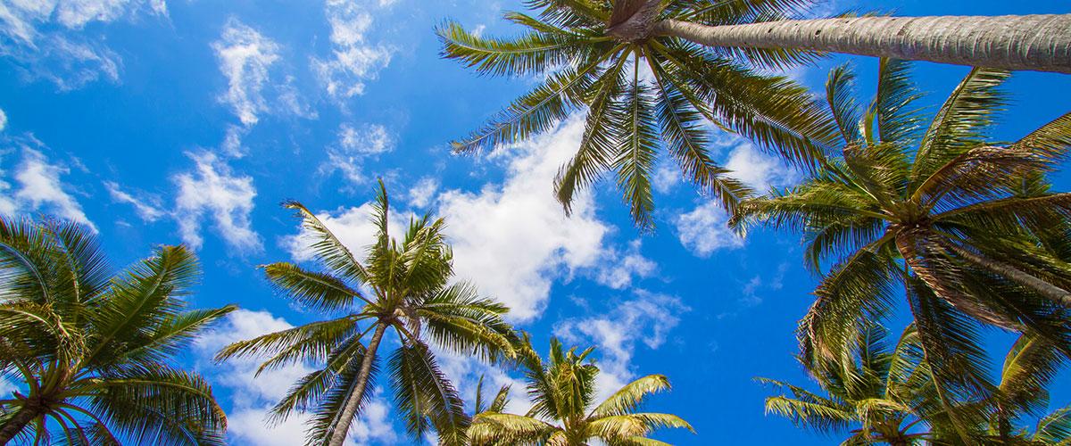 Palmen Strand Himmel Tor zur Seele